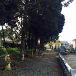 豊橋市 お寺様の墓地にて現地確認です。